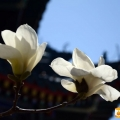 中山公园的春花