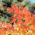 园博园之秋
