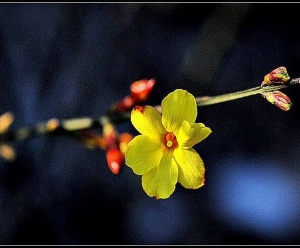 【原创摄影】春的讯息 — 辛丑年正月