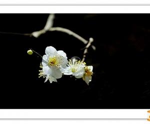 休闲摄影-花卉