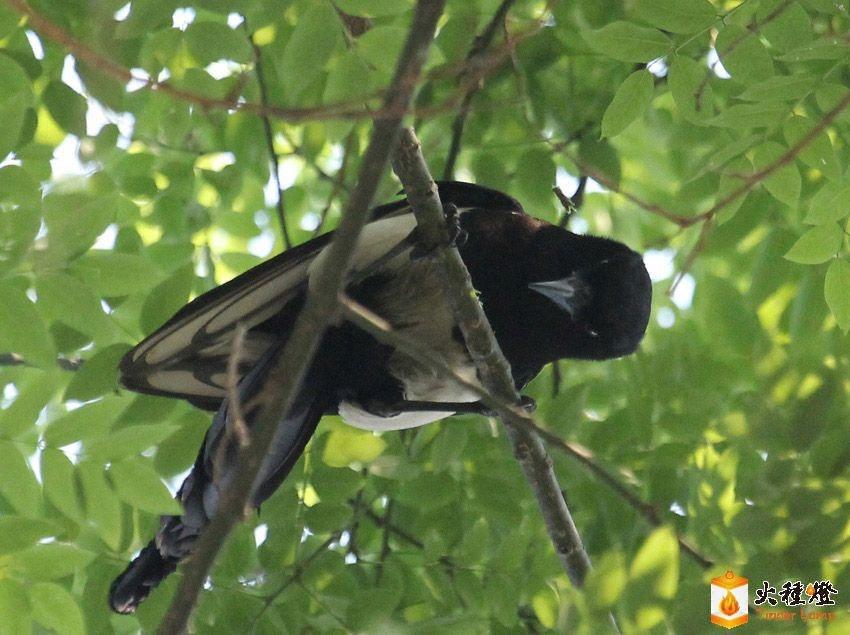 看树枝联想动物图片