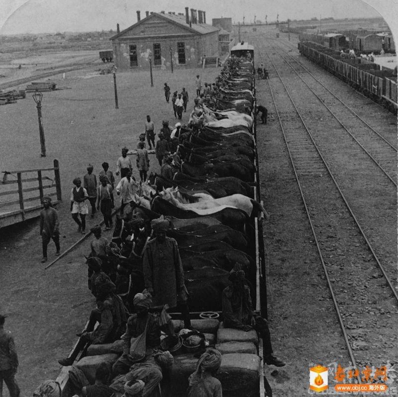 运送马匹的火车.jpg