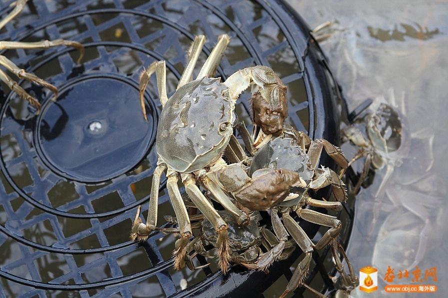 台灣人常吃的螃蟹種類
