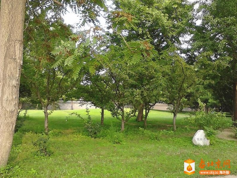Oasis090871531430plantingtreesphto.jpg