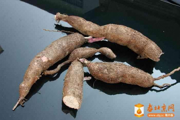 樹薯-2.JPG