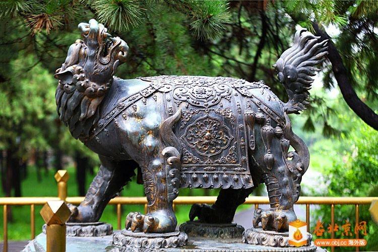 西城瑰宝--动物园铜犼.JPG