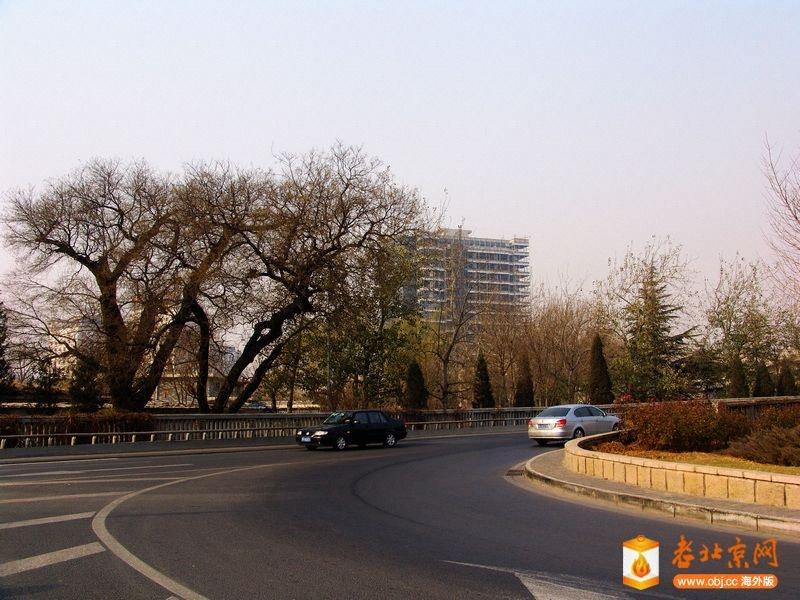 六里桥五显财神庙旧址的两棵树.JPG