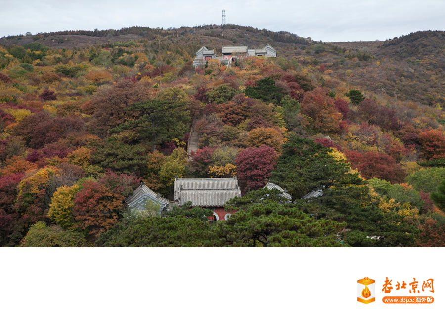 今年拍红叶好去处--妙峰山
