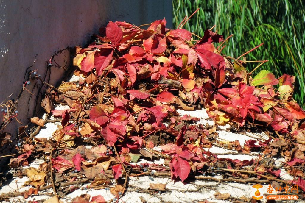 秋天的印象