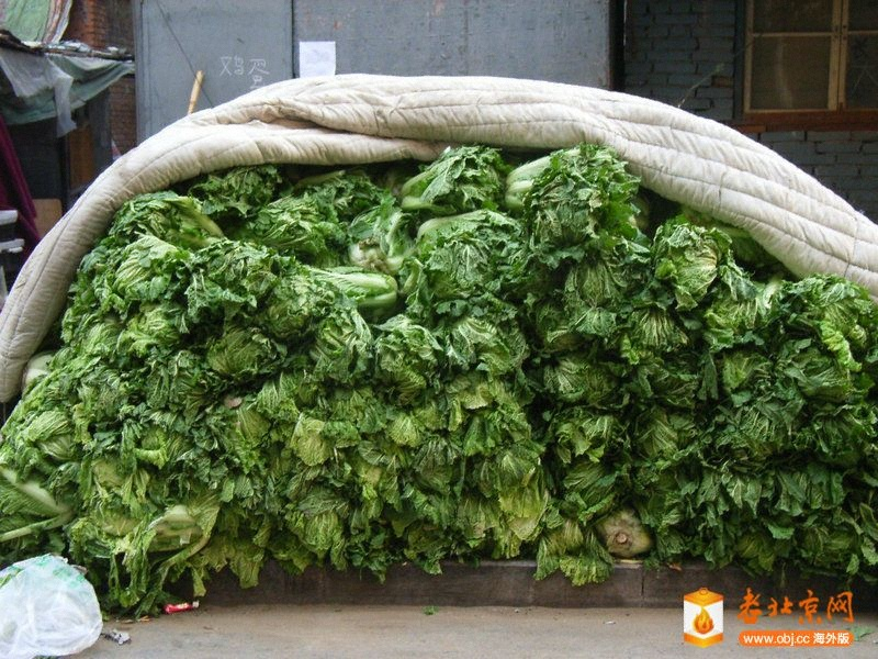 冬储大白菜-茶余饭后-服务器里的北京-老北京网