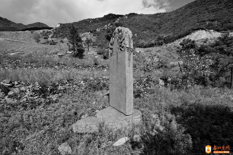 荒山中的金代石碑保护令人堪忧