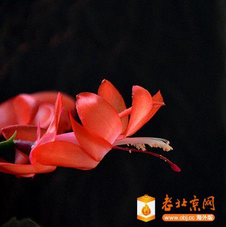 DSC_6131_副本.jpg