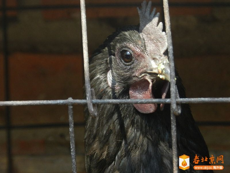 RE: 二十七 杀年鸡