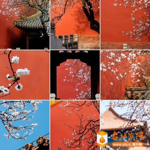 杏花 --- 图片来源:故宫博物院