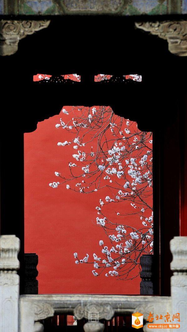 RE: 杏花 --- 图片来源:故宫博物院