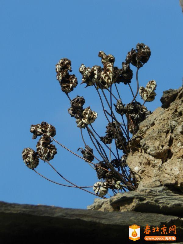 RE: 墙缝里的植物