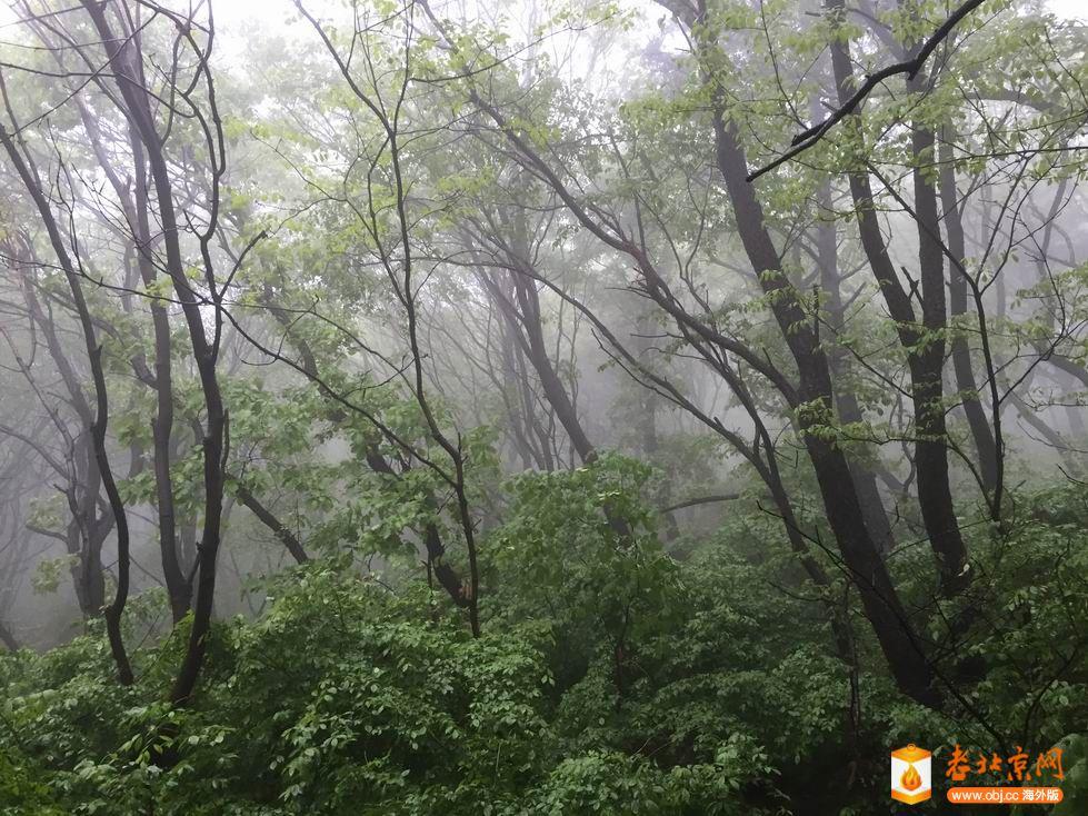 雨中的山林