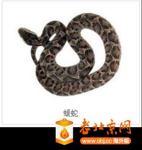 RE: 蛇
