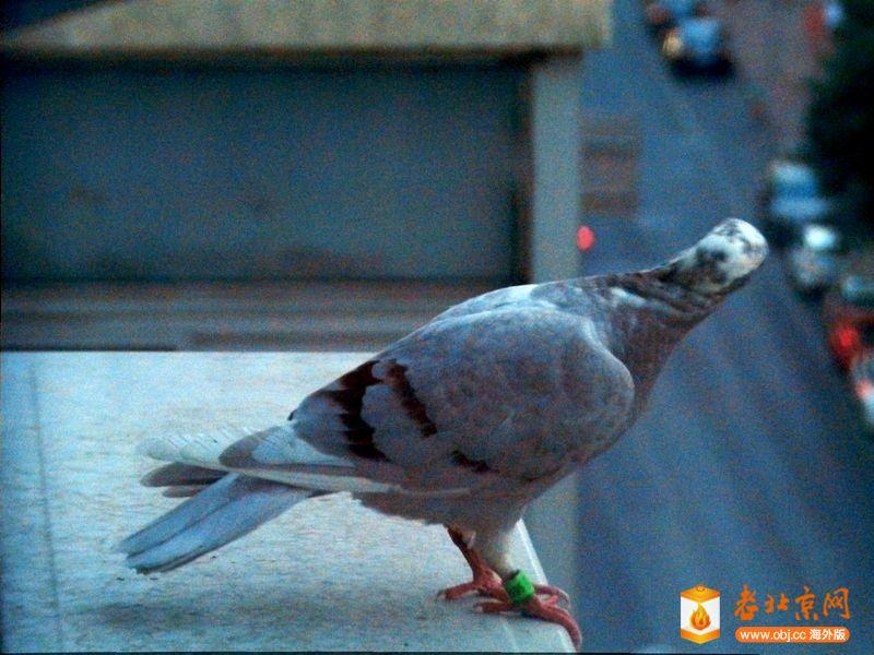 刚落木门家空调一只鸽子!