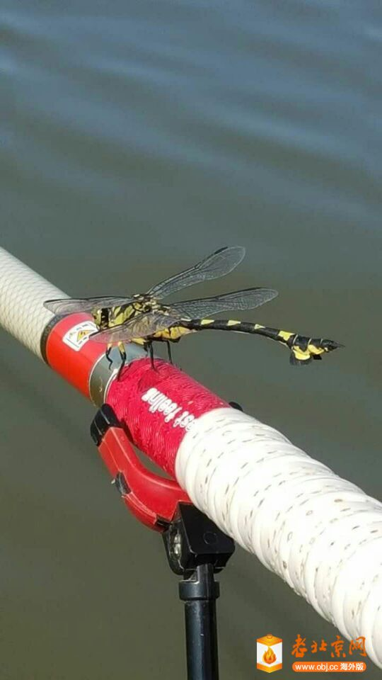 RE: 蜻蜓