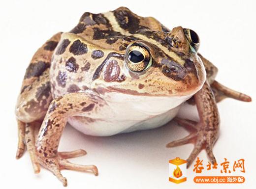 RE: 青蛙