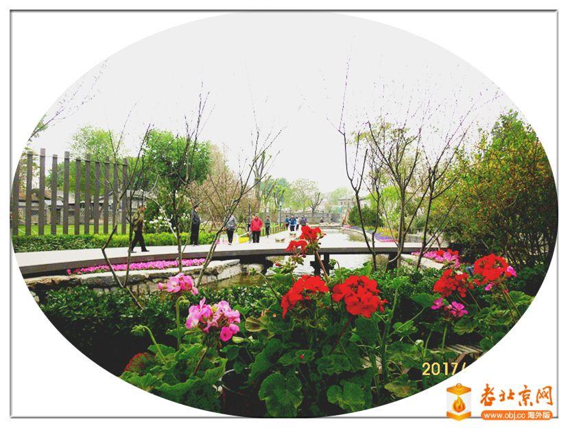 春雨霏霏游芦草园