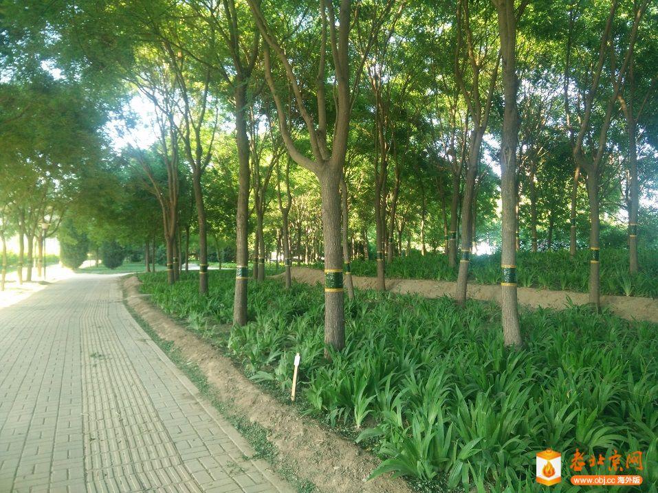 乡间小路及绿化带