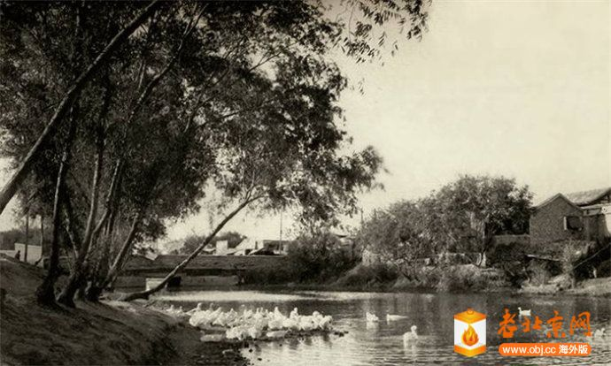 东直门外护城河上的白鸭子.jpg