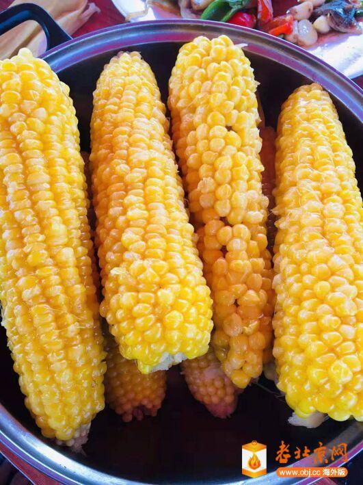 老玉米.jpg