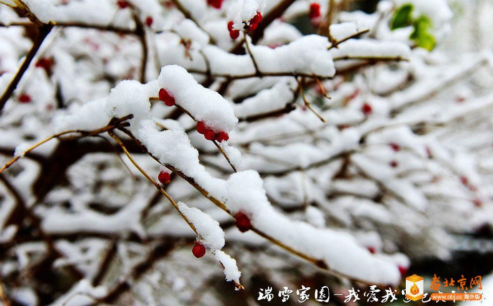 DSC_3606_副本.jpg