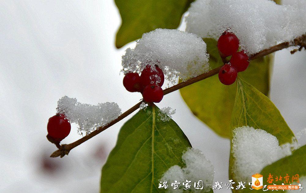 DSC_3634_副本.jpg