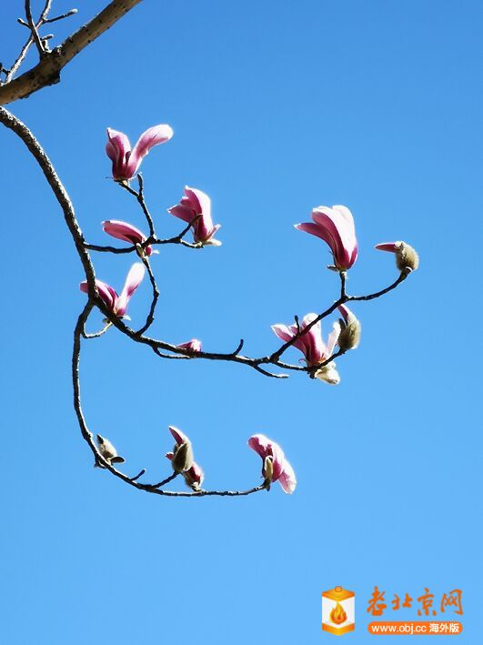 春意渐浓2.jpg