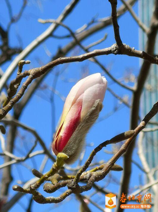 春意渐浓4.jpg