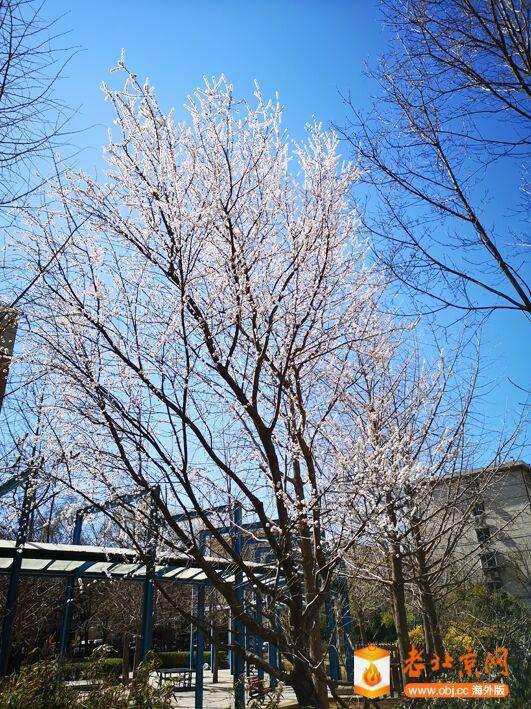 春意渐浓5.jpg