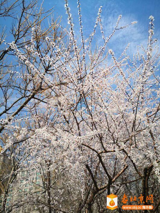 春意渐浓10.jpg