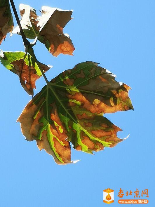 秋天了.jpg