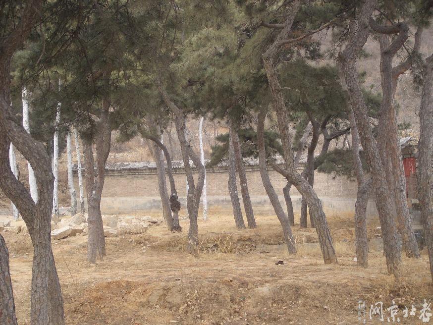 选墓地前面有树