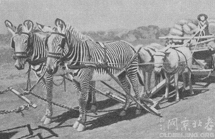 人类驯服动物的探索