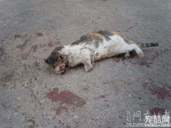 北京的动物,植物 69