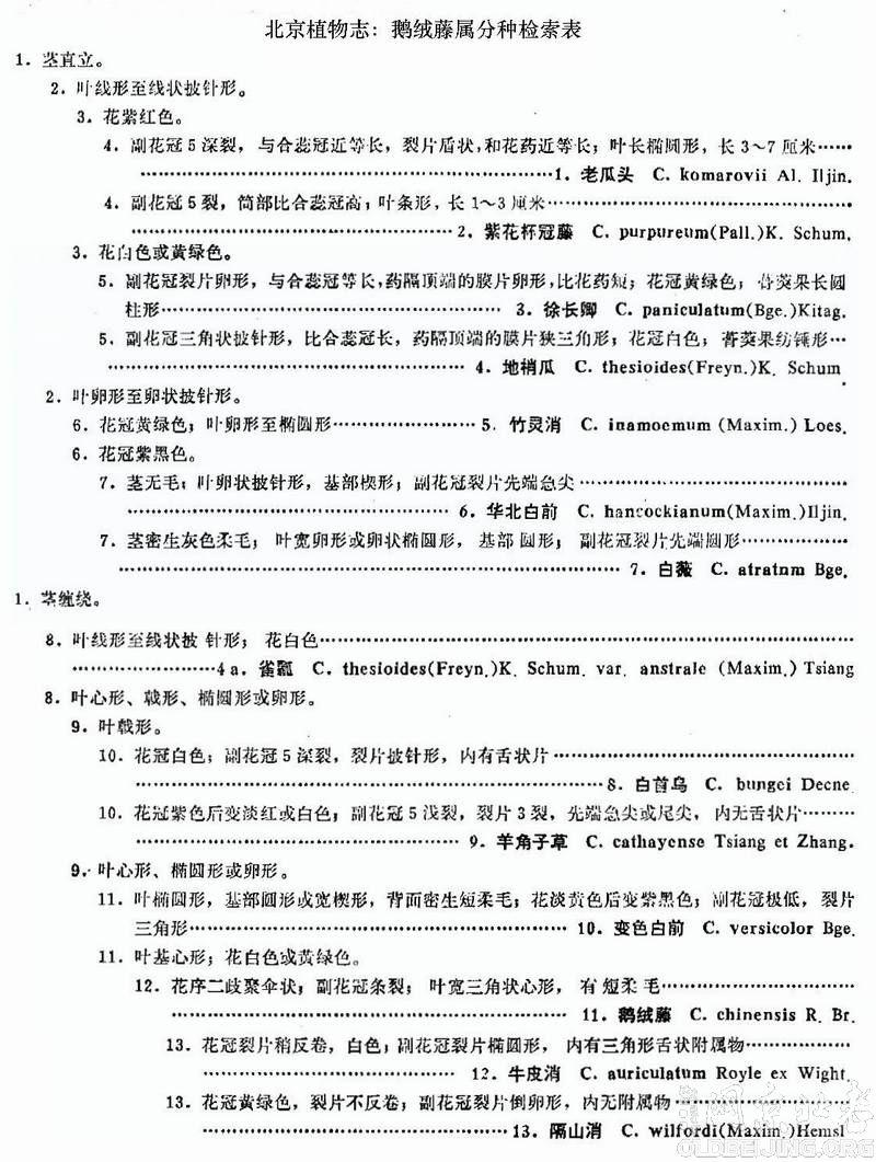 鹅绒藤属分种检索表