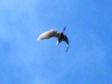 天上一只大鸟-北京的动物