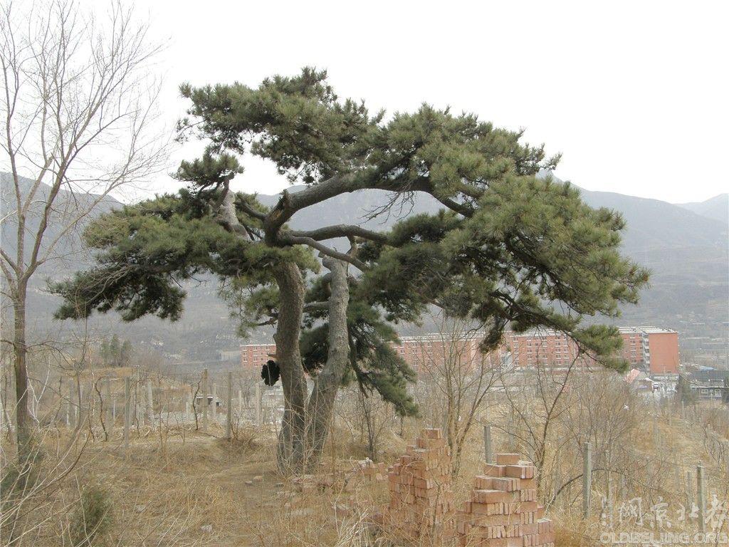 门头沟色树坟河北村古墓