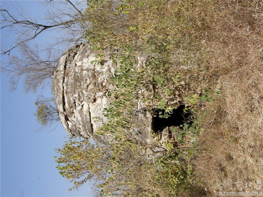 常乐寺后的古墓