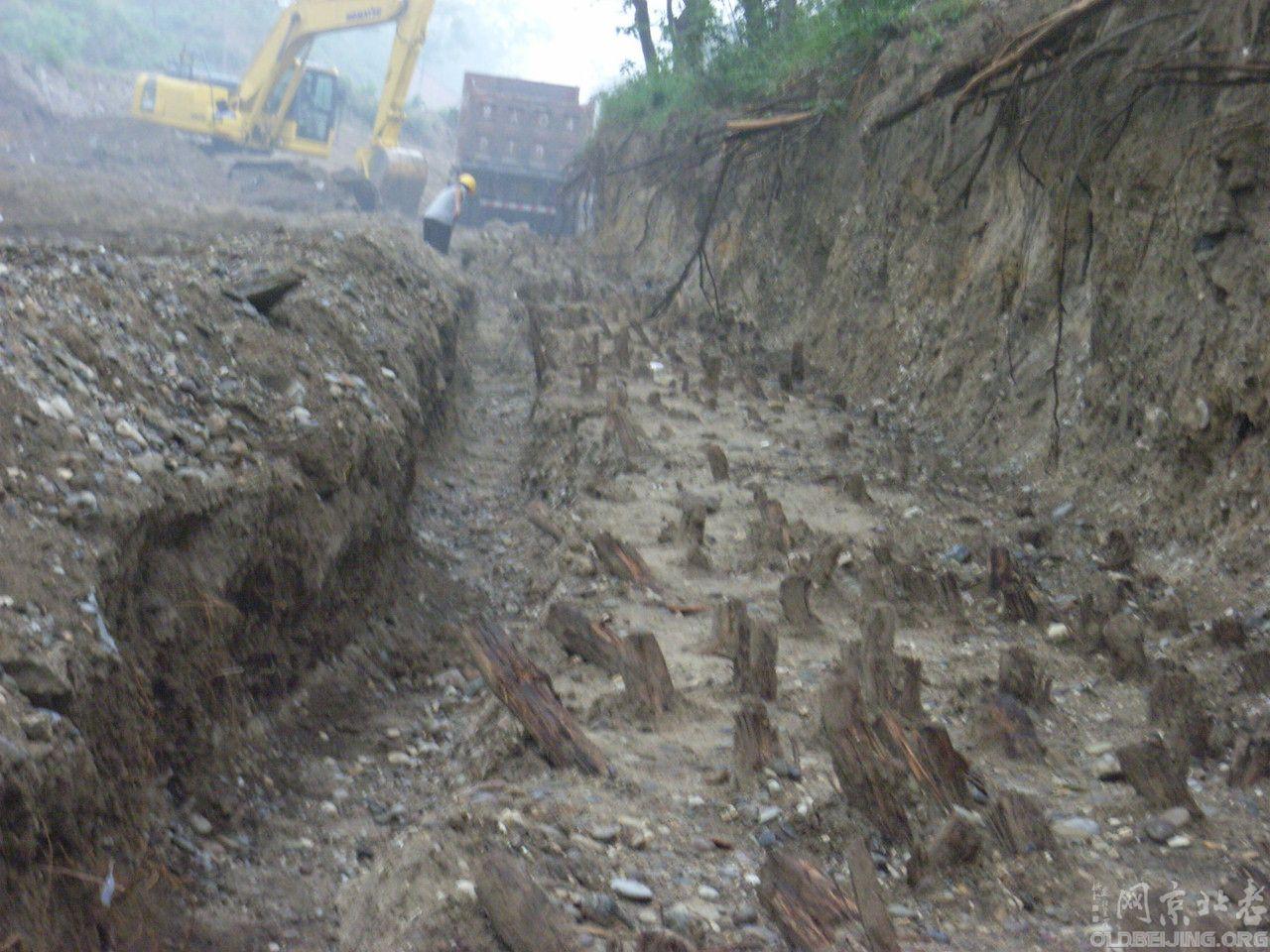 [原创]圆明园古河道修复中拍到柏木桩阵
